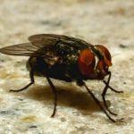 Tiêu diệt ruồi nhanh gọn, hiệu quả với 20 mẹo cực hay