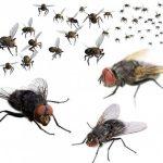Cách đuổi sạch ruồi ra khỏi nhà bằng phương pháp tự nhiên