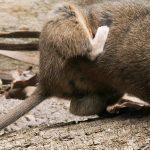Giải pháp xử lý chuột toàn diện