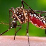 Thông tin về Zika – Dịch Zika có thể bùng phát mạnh ở Việt Nam